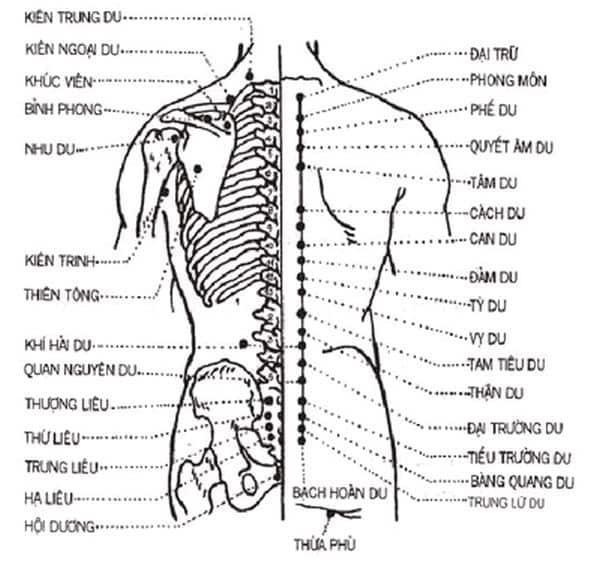 Cách bấm huyệt chữa bệnh đau lưng hiệu quả tức thì