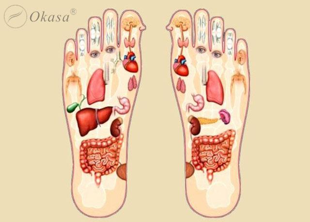 Khả năng trị liệu của phương pháp bấm huyệt vùng phản xạ chân