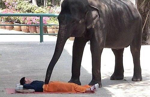 Choáng với kiểu massage bằng… voi tại Thái Lan