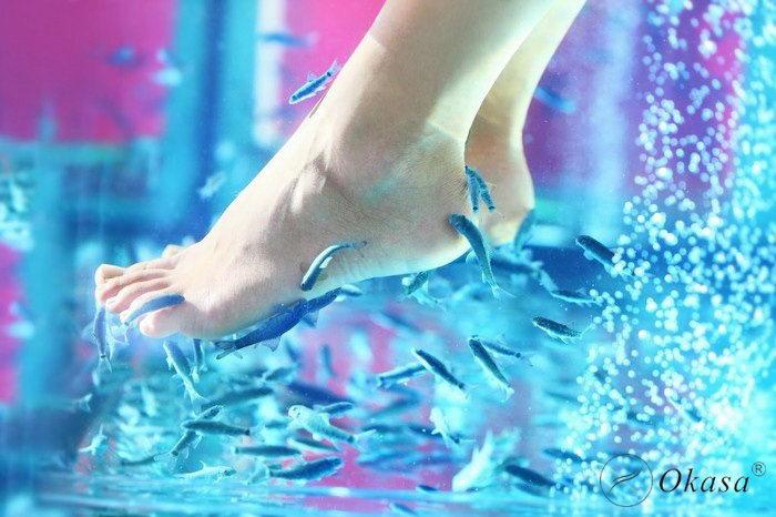 Massage bằng cá có thể truyền bệnh cho con người