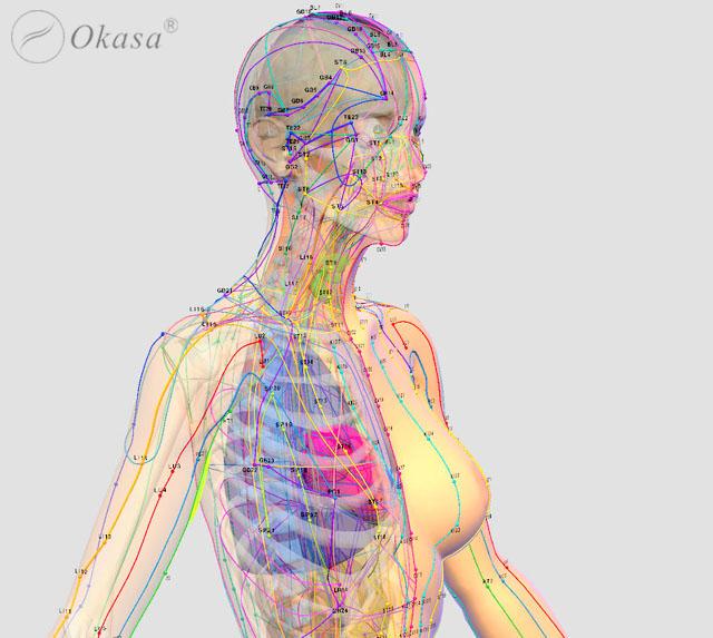 Tìm hiểu hệ kinh lạc trong cơ thể