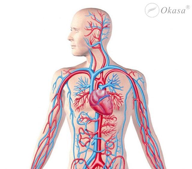 Tìm hiểu quy trình máu chảy qua tim
